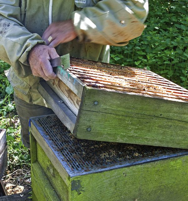 Be generous with supers – the space is needed more for the bees than the honey