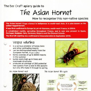 The Asian Hornet Apiary Guide
