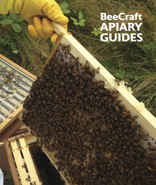 Apiary Guide Multipack Offer