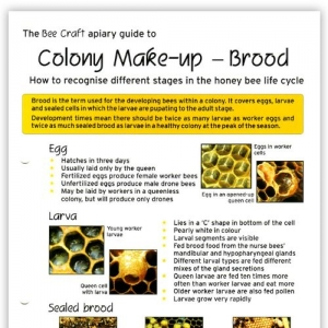 Colony Make-Up - Brood